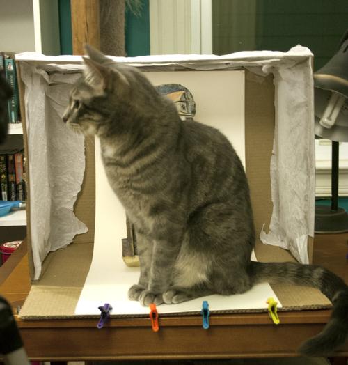 Lightbox+Cat.jpg