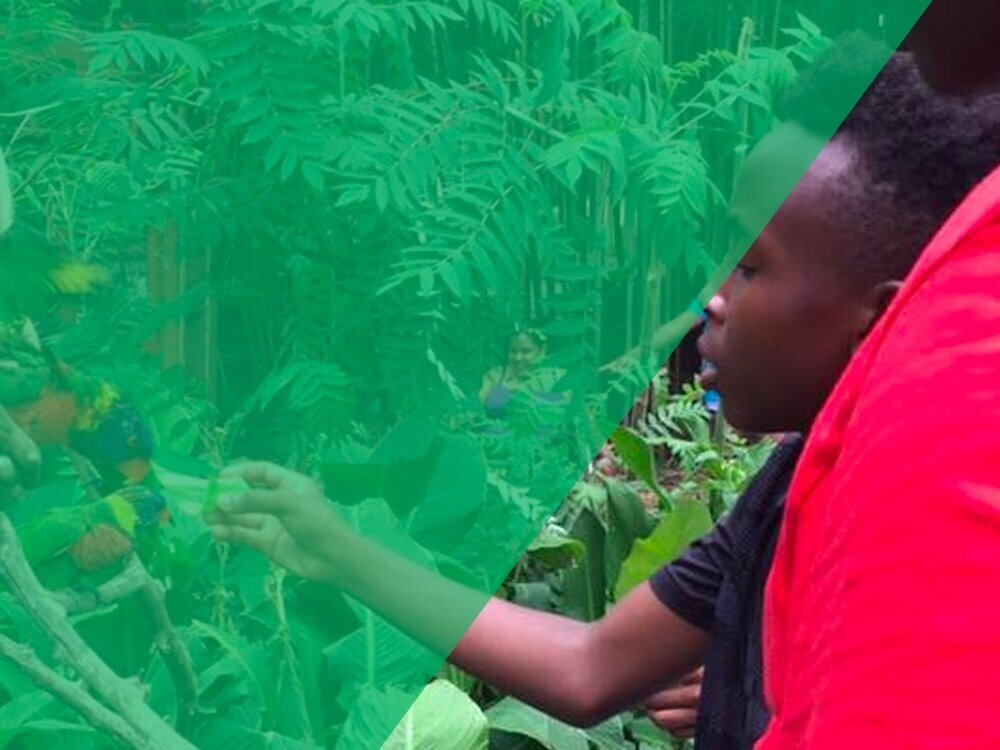 We believe all youth have the potential to flourish.    What We Do  How You Can Help