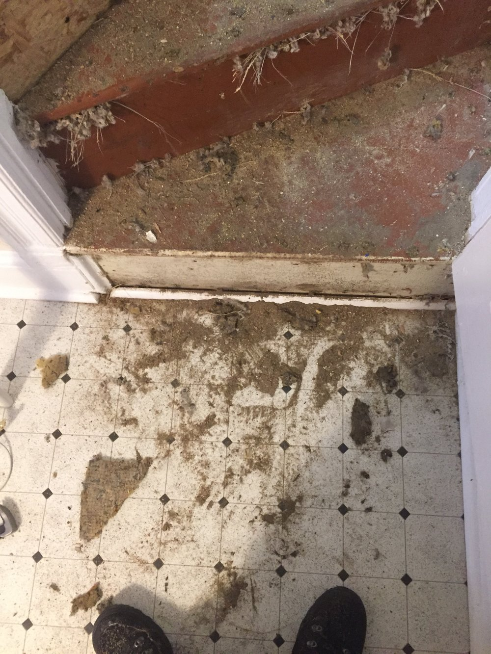 Dirt and carpet scraps.