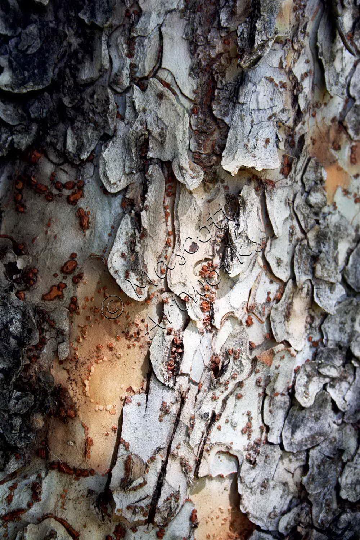 Bark platelets