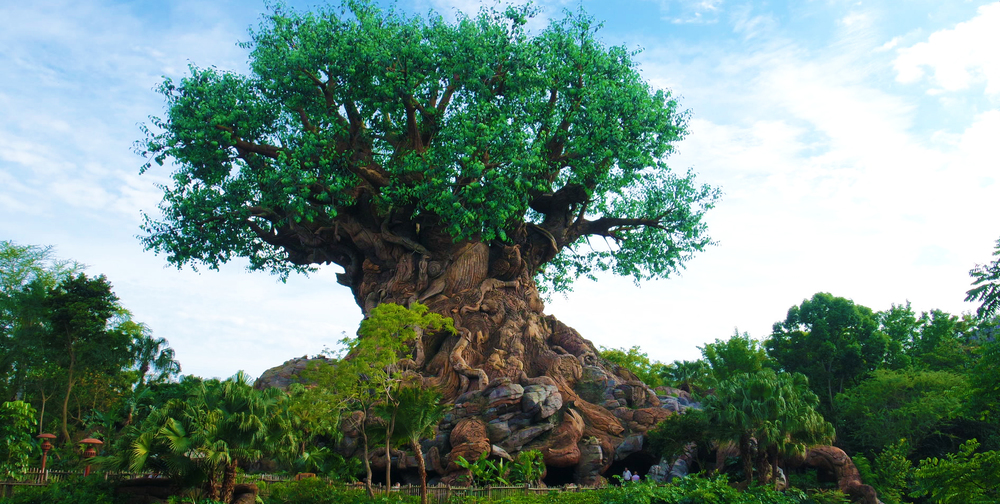 The Iconic Animal Kingdom tree you see as soon as you walk in to the park!