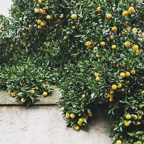 When life gives you lemons… You get beautiful summer views! #lemon #summer #beauty #nature