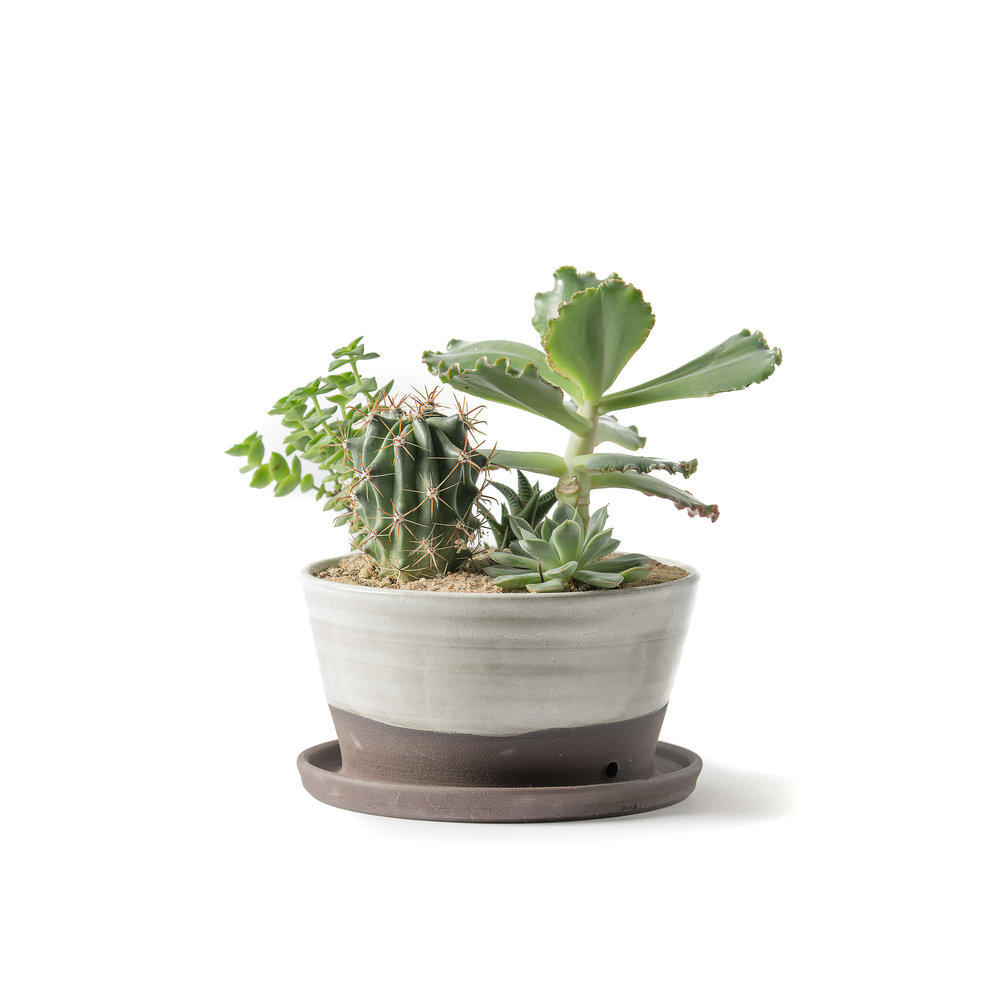 """LARGE custom ceramic planter made for MWFC by local artist Small Flower Pottery, planted with varied beautiful succulents and cactus. Pots have a drainage hole and come with a matching saucer.Each one is unique and is approximately 8""""w x 5""""h.$72"""