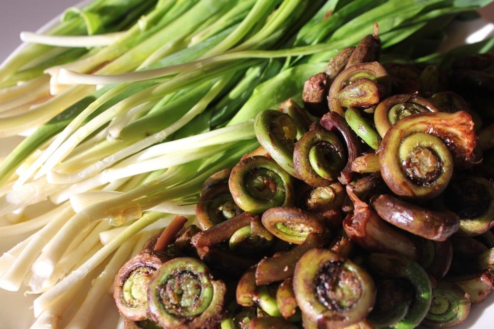 FiddleHeadFerns.jpg