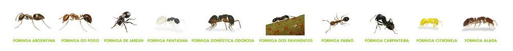 TIPOS DE FORMIGA.jpg