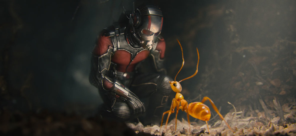 formiga domesticada no filma 'homem-formiga''