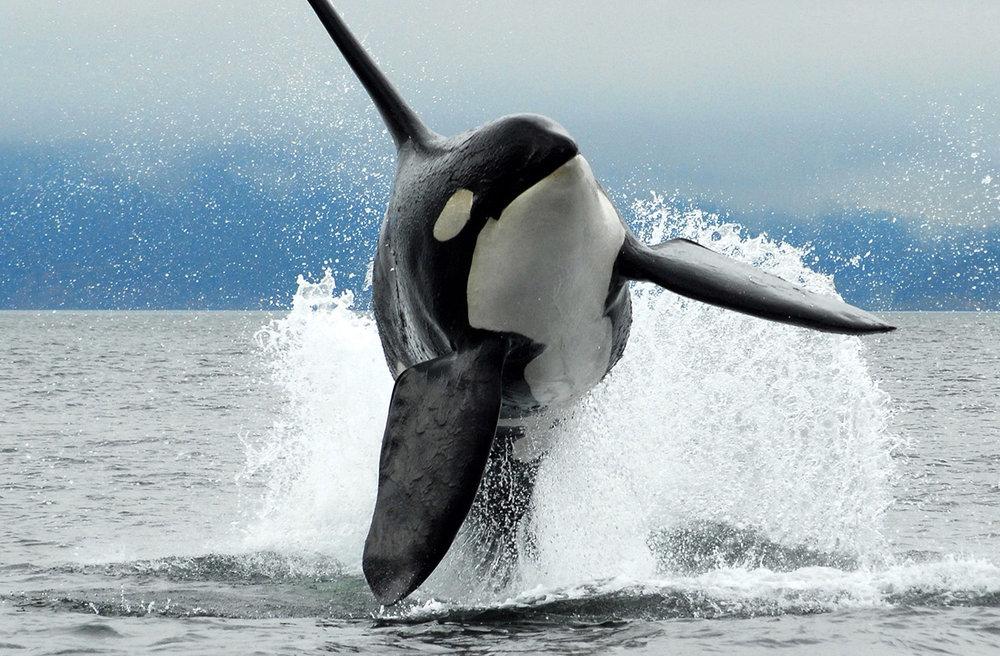 whales-wildlife-1.jpg