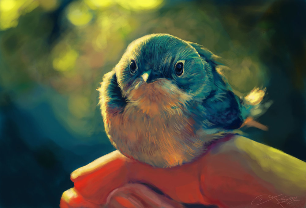 Blue Bird Study