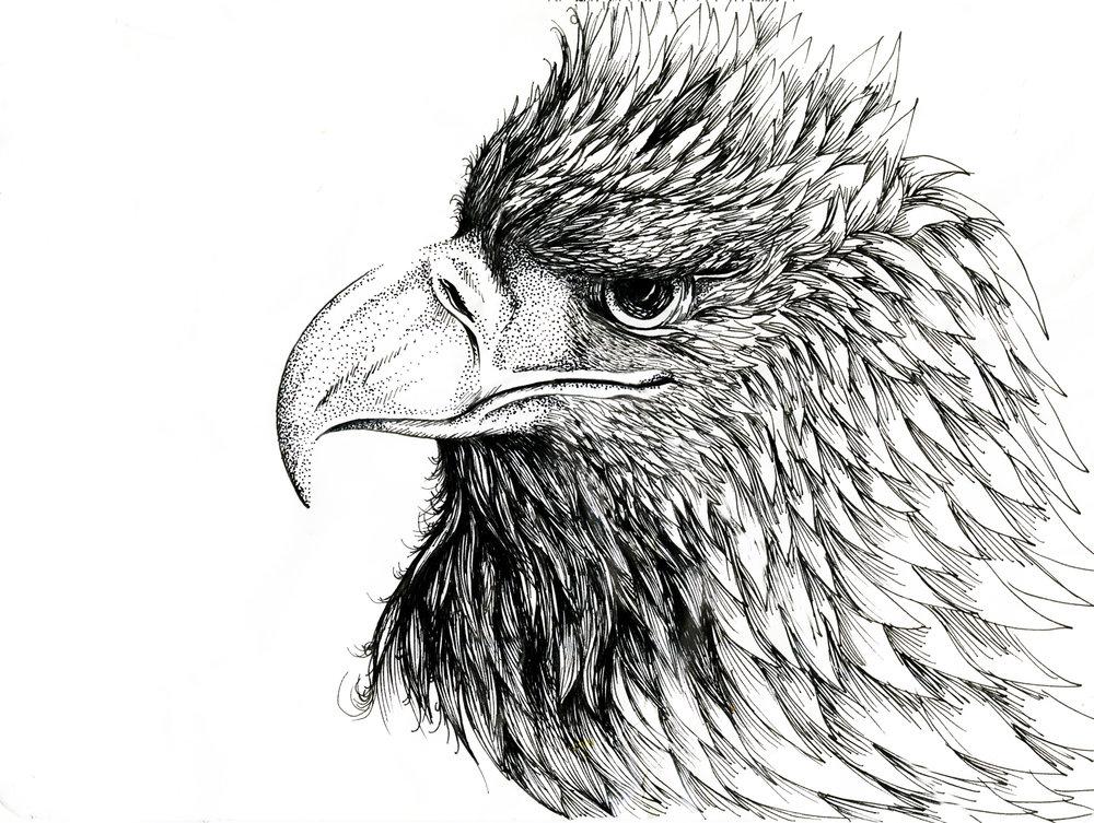 Eagle - a simple pen sketch.
