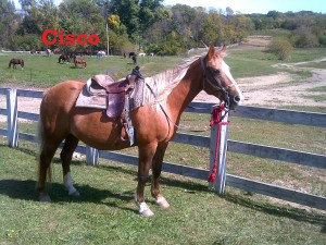 Cisco – Line Horse – Mare – Quarter Horse – born 1993 I am an older mare in the herd and have worked my way up to one of the leaders here on the ranch. I am a very trustworthy and sure-footed horse.