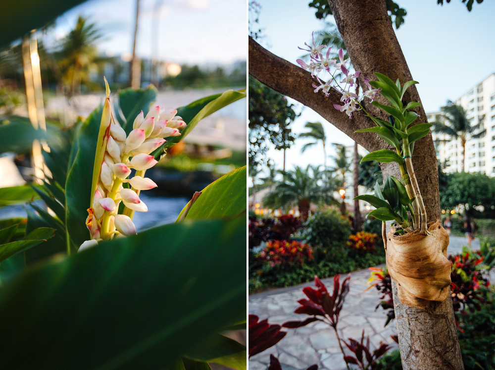 Did you know you can grow orchids on trees?