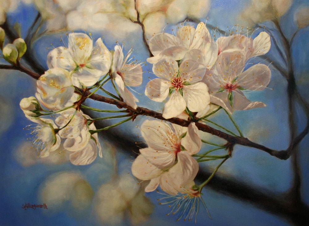 Sue Killingsworth - Mexican Plum Tree Blossoms.JPG