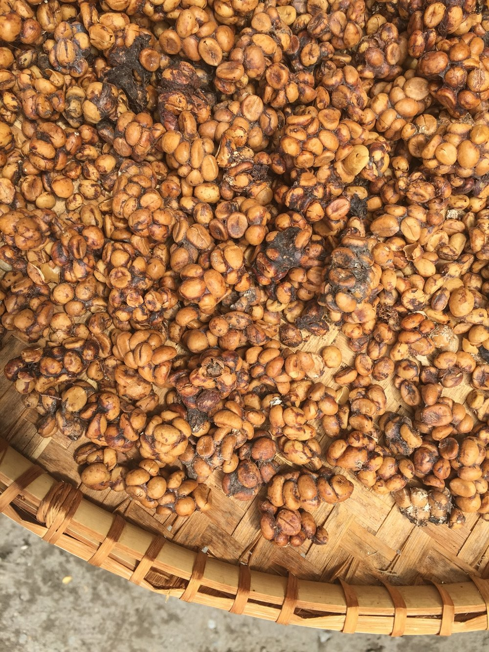 Place where you can get Luwak coffee made from beans shat by civets