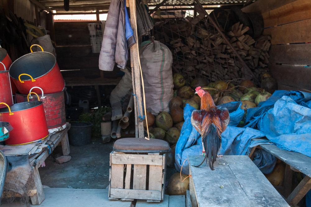 INDONESIA Sulawesi Toraja—2016 August 30 02;12;12.jpg