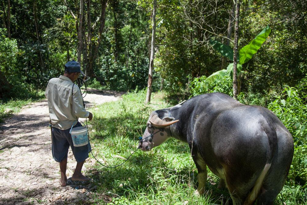 INDONESIA Sulawesi Toraja—2016 August 31 23;39;29.jpg