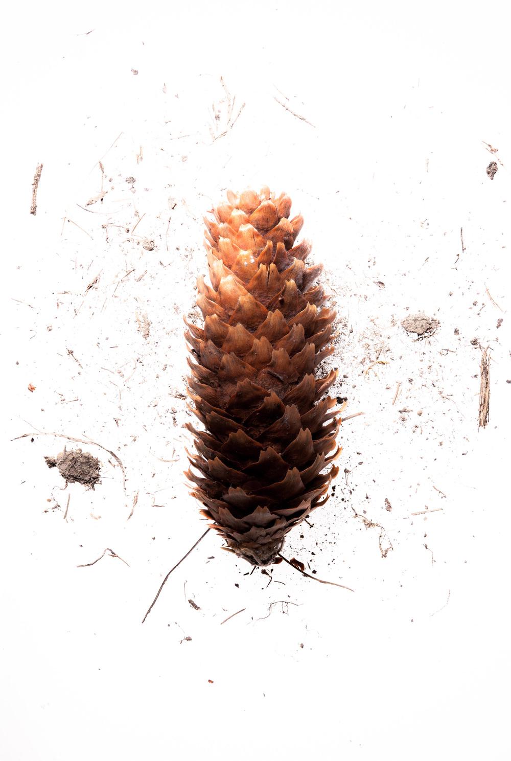 acorn2.jpg