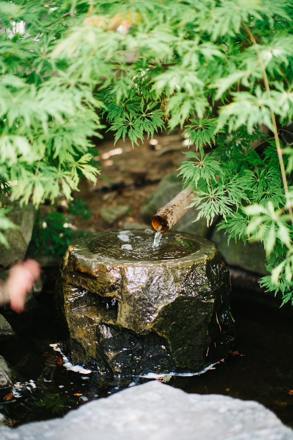 The framing of the Laceleaf Maple around the rock and bamboo water feature.