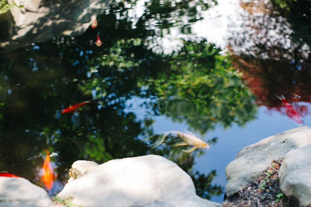 The colorful diversity of the Koi. All beautiful both in their individualality and as a group.