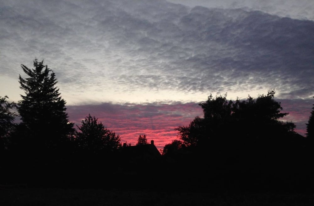 Nice picture of  dramatic sunset over the garden... might be a good time to look for bats?