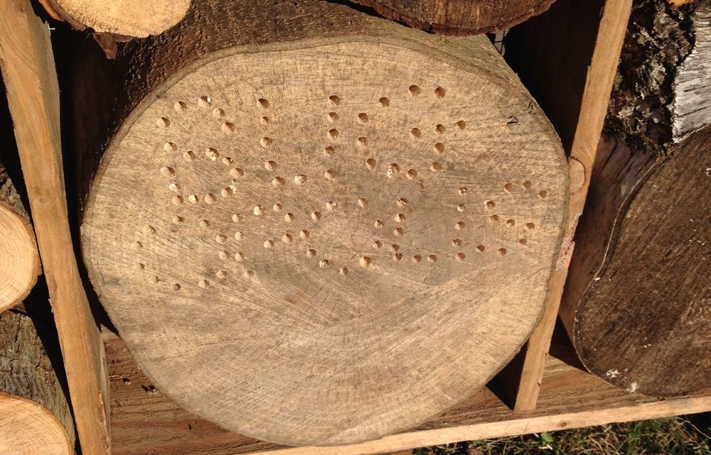 January 2016. The 'holey sign' for the Bug-opolis. Above this, there are an increasing number of sticks being gathered, including ones with central holes for solitary bees to lay eggs. It is deliberately in a sunny position. We can put smaller ones in other spots with diferent heights and climates.