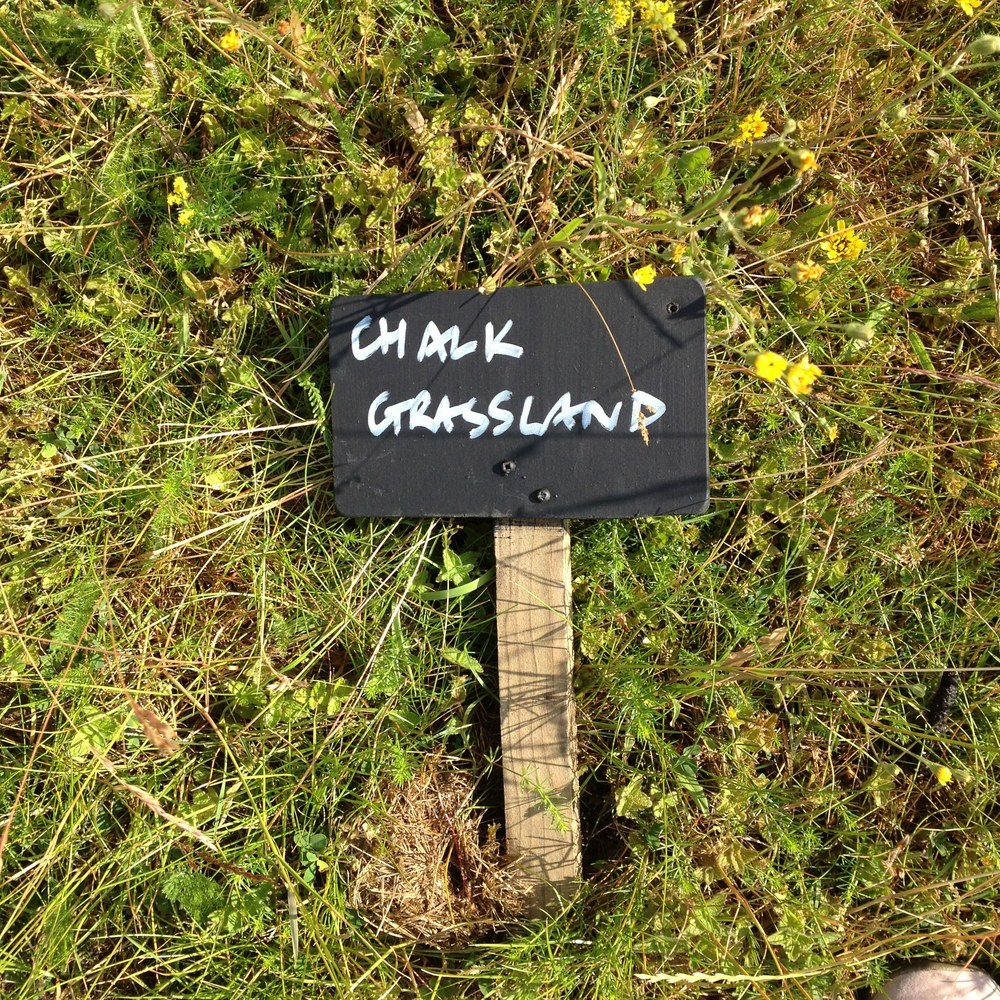 Summer 2015. One of the patches of chalk grassland flora.