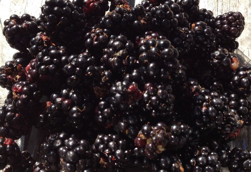 Blackberries, grown in a local garden and 'swap and shared' at Rock Abundance stalls