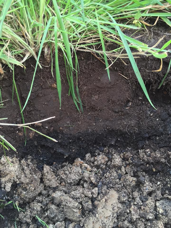 2015, in the former green area: we have a thin layer of very sandy, stone-free soil overlying a layer of clinker and then clay. Sometimes the clinker is much thicker than this and often there is a layer of hardcore too.