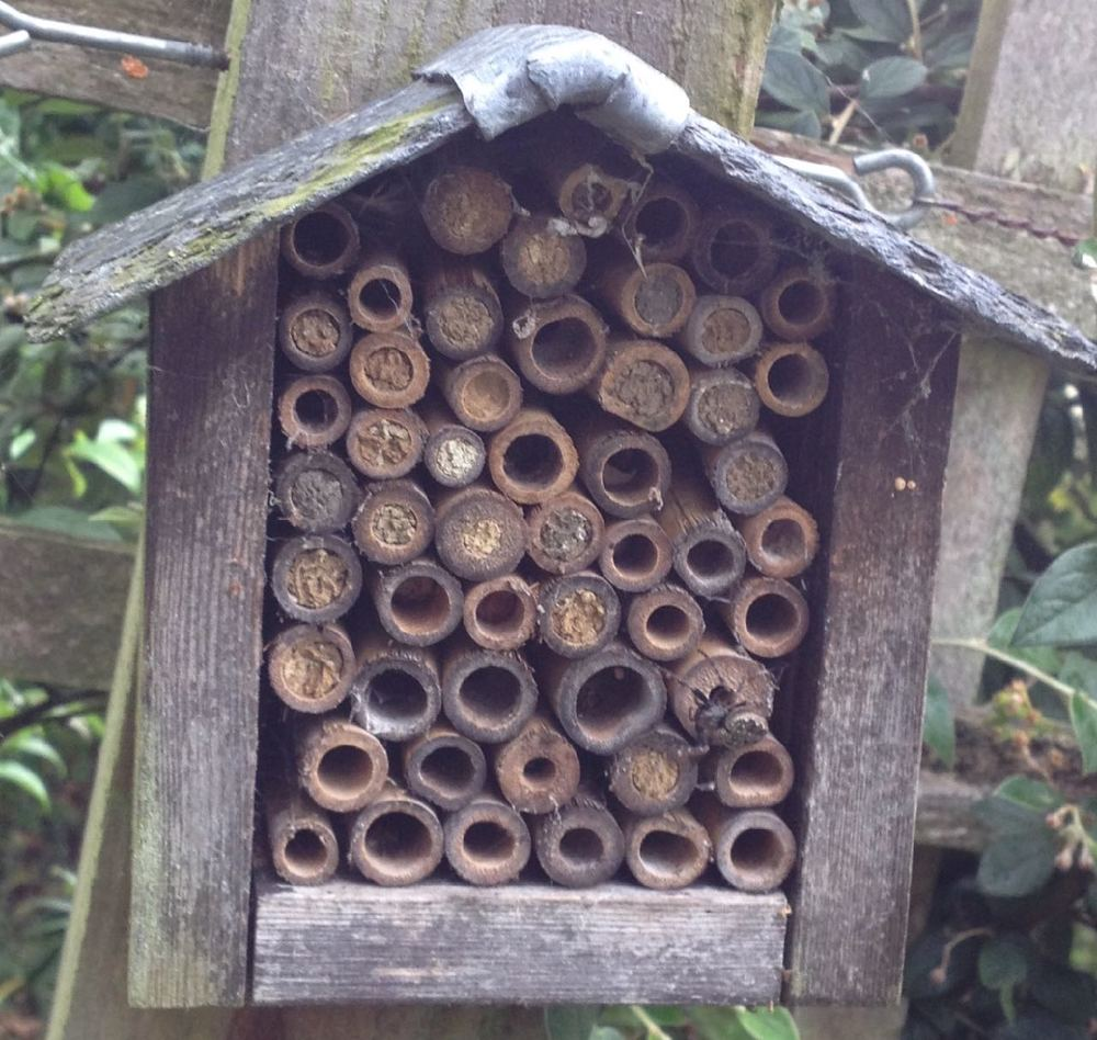 A simple, bought bug hotel in a local garden with bees in residence - and a few spiders too.