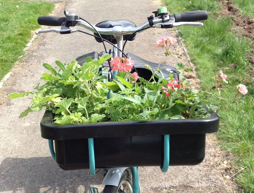 Plants arriving by cycle