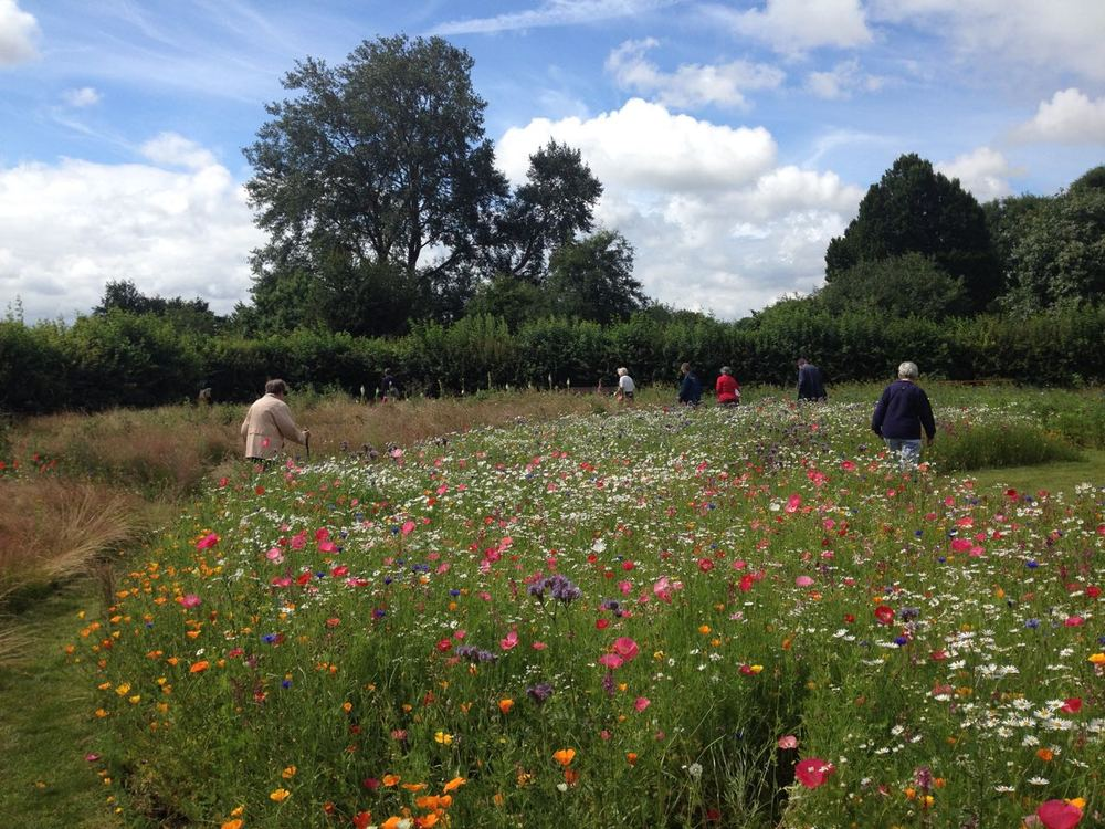 A few of our Tuesday morning social walkers starting off their walk by strolling through the meadow. We finish off the walk now by taking tea (and biscuits) in the garden too. Do join us - 10.30 am every week - tea until about 12ish. All free, supported by Sustrans.