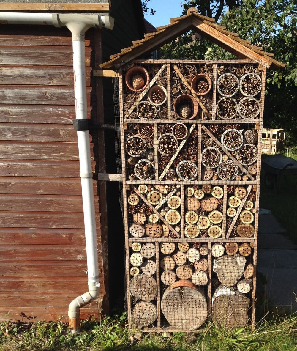 Re-designed and re-made Bugopolis - solitary bees were flying into the holes as we constructed it