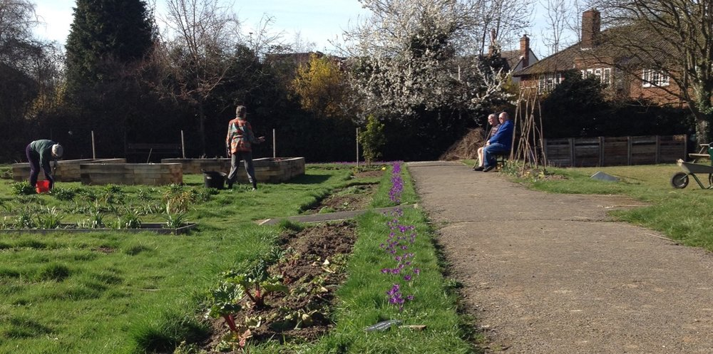 Volunteer gardeners working (and relaxing) in the March sun. The purple crocuses are enjoying the sun too.
