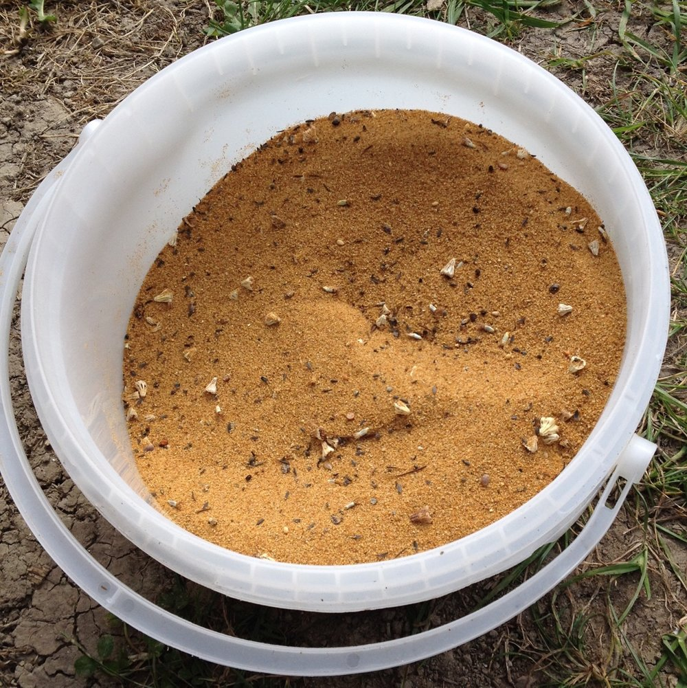 Seeds mixed with sand to help even sowing.