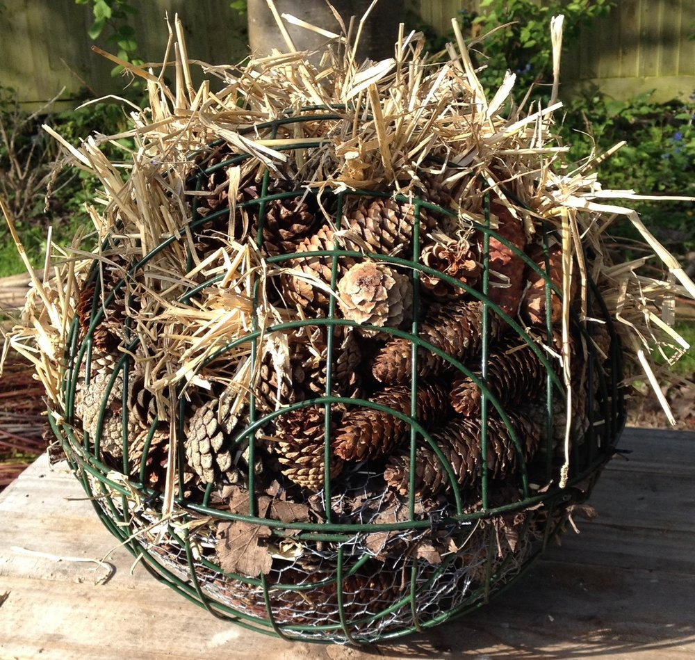 We were given these large hanging baskets some time ago and have been waiting to collect enough fir cones to stuff them. The ball also has some small terracotta pots, leafmould and straw in it, cabled tied. It should be a good habitat for creatures but is quite heavy - we need to find somewhere safe to hang it and a strong chain!