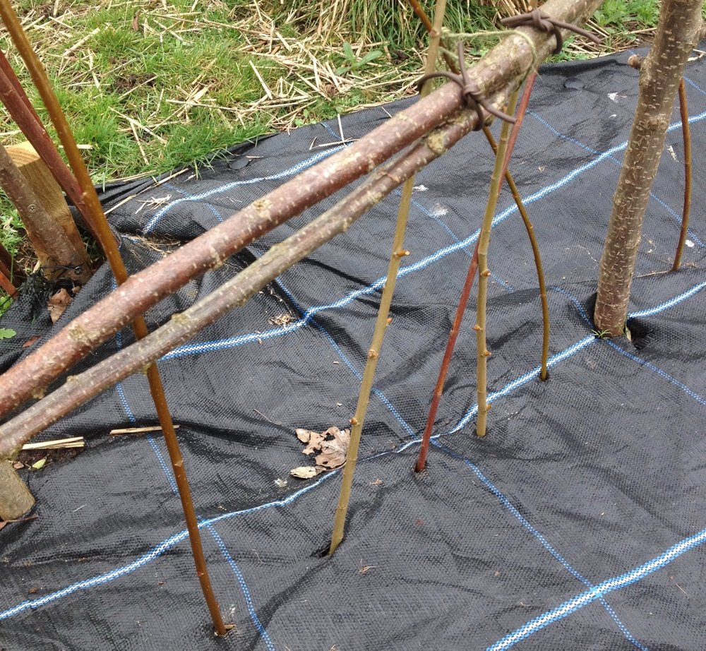 We planted some basketry willow - three or so colours in our living willow circle... looking forward to it sprouting in the Spring.