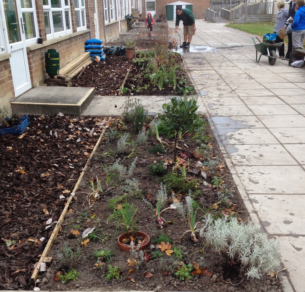November 2017: making a start on the new school garden at Queen Edith's primary school. We have had a frustratingly cold and wet winter - roll on the Spring!