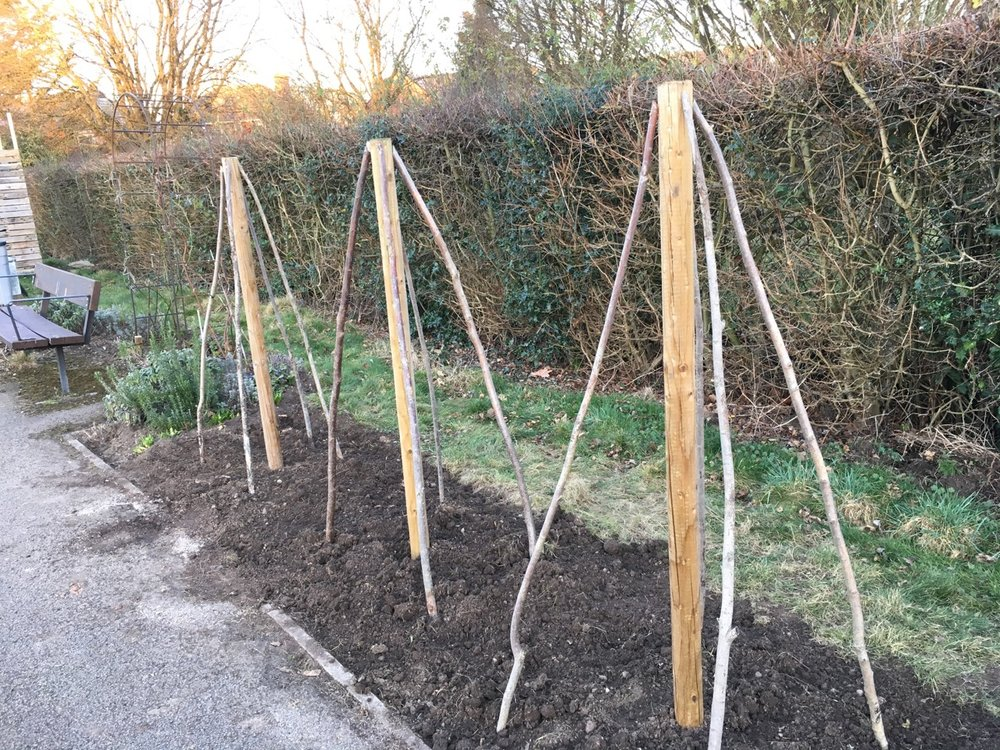 The start of some new sweet pea wigwams - thanks to the diggers and constructors. They should have better soil and will be nearer the water supply compared with our previous bed. They will remind us of all the people who love, and loved, growing sweet peas - especially two special grandfathers… The tree stakes were re-purposed from a local public art project - thanks Paul! We hope they will give a waft of fragrance near the garden gate and our scented garden and that people will cut them often to take home with them.