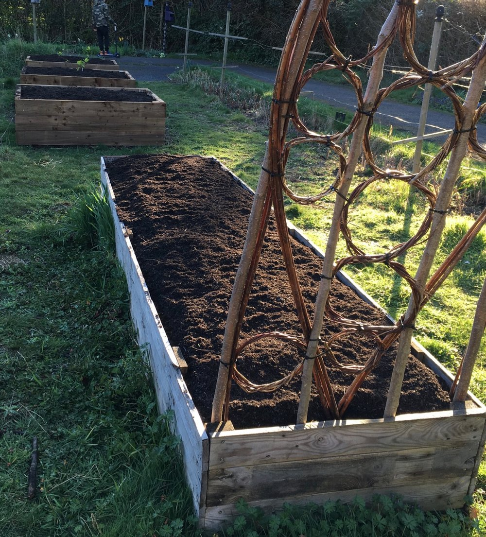 The new and old raised beds got a top mulch of soil conditioner too.