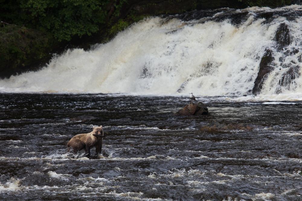 BearsofDurango-0141.jpg
