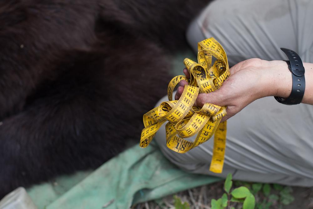 BearsofDurango-2.jpg