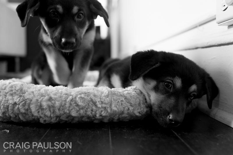 Pups002.jpg
