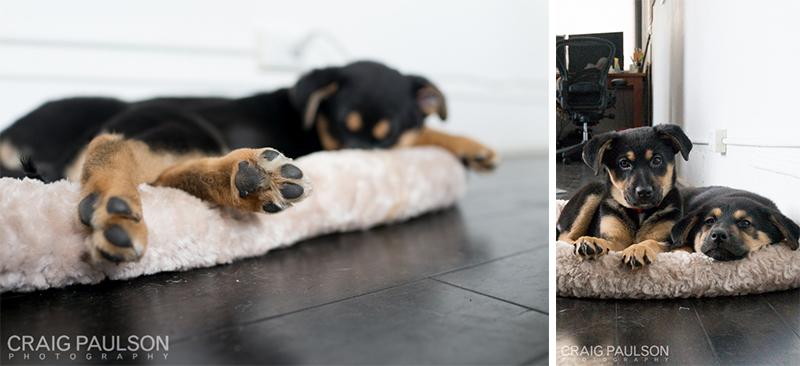 Pups003.jpg