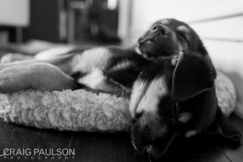 Pups004.jpg