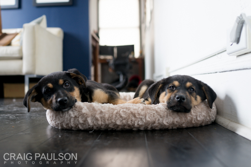 Pups001.jpg