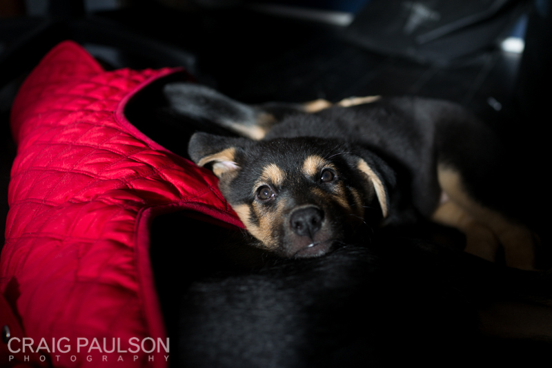 Pups008.jpg