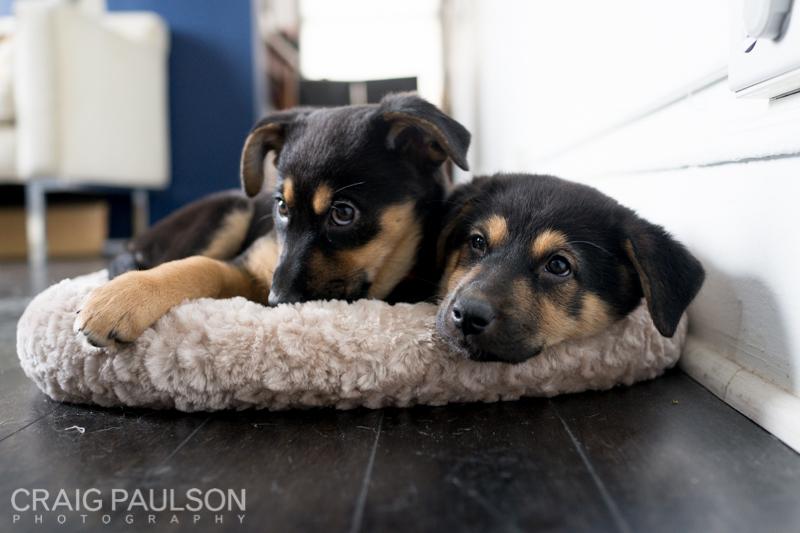 Pups009.jpg