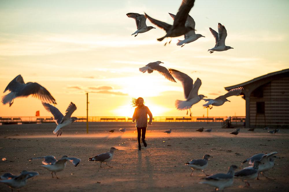 photography nature sunset birds 0002