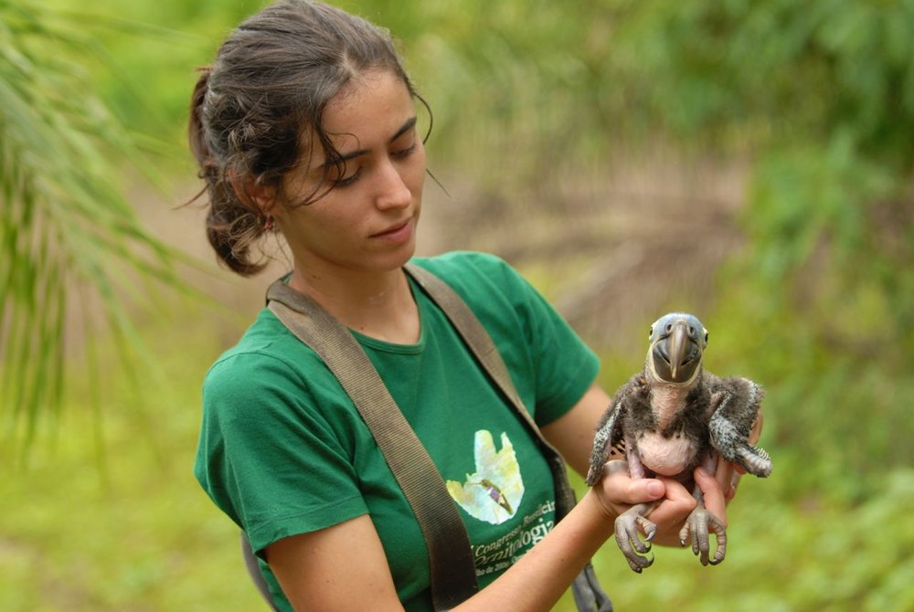 Young volunteer at Hyacinth Macaw conservation project site.