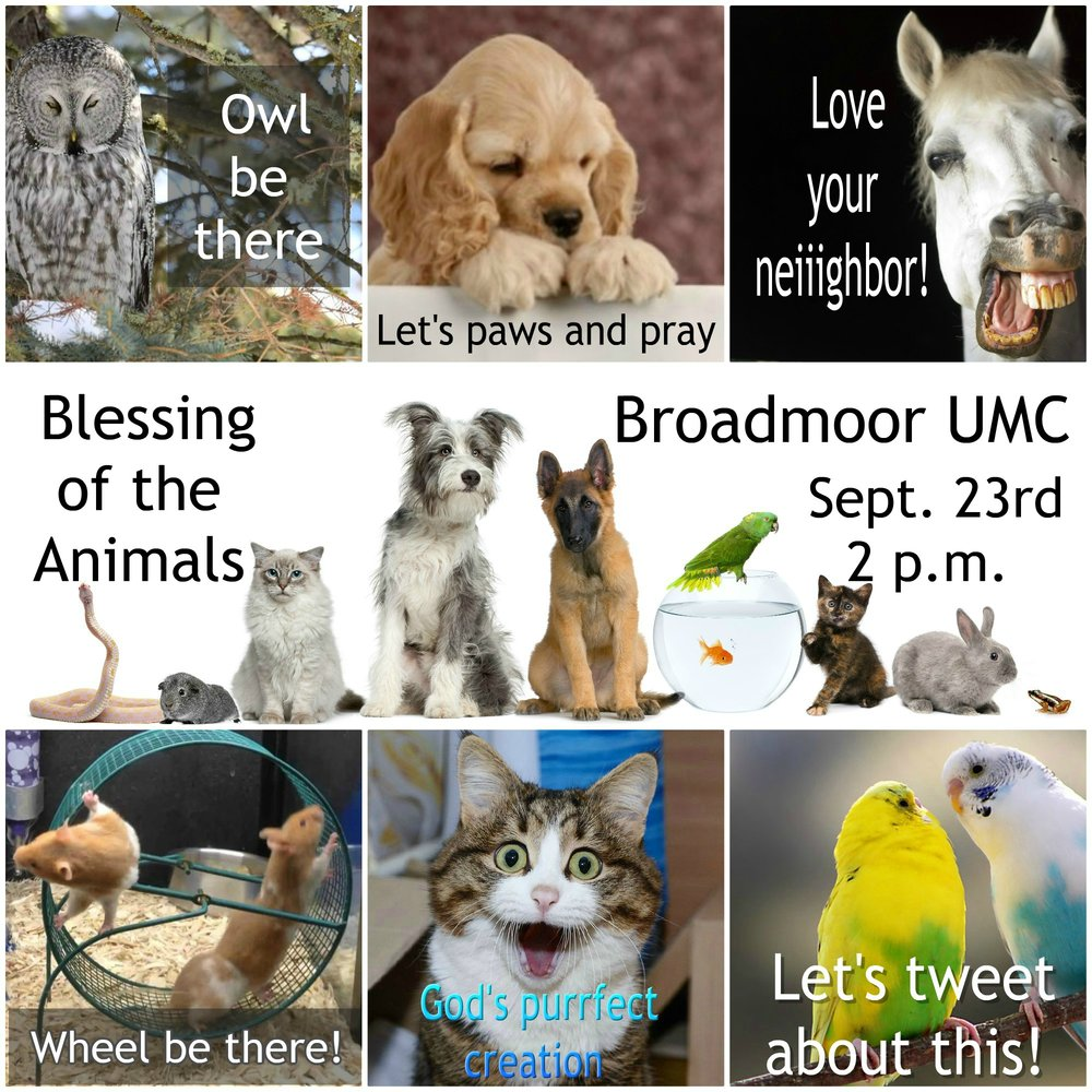 - In this Edition | September 6, 2018Blessing of the AnimalsBible BlastChurch Transformation UpdateMission Marketplace Nov. 2nd & 3rdand SO MUCH MORE!