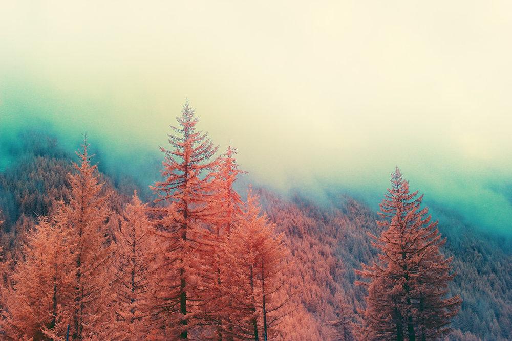 IR_Oregon_Forest_05c.jpg